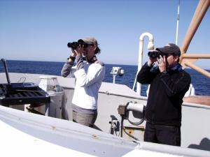 Observers with binoculars look for marine mammals and birds