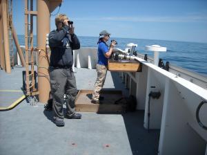 marine mammal bird observers