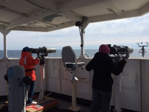 Marine mammal observers at work.