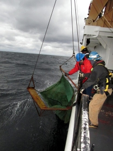 crewmen retrieve Isaacs-Kidd midwater trawl