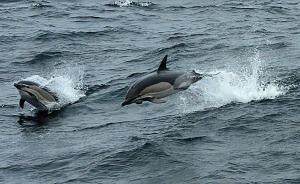 Slender, leaping dolphins