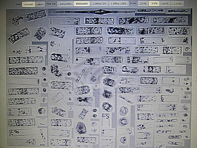 Diatoms2 rd.jpg