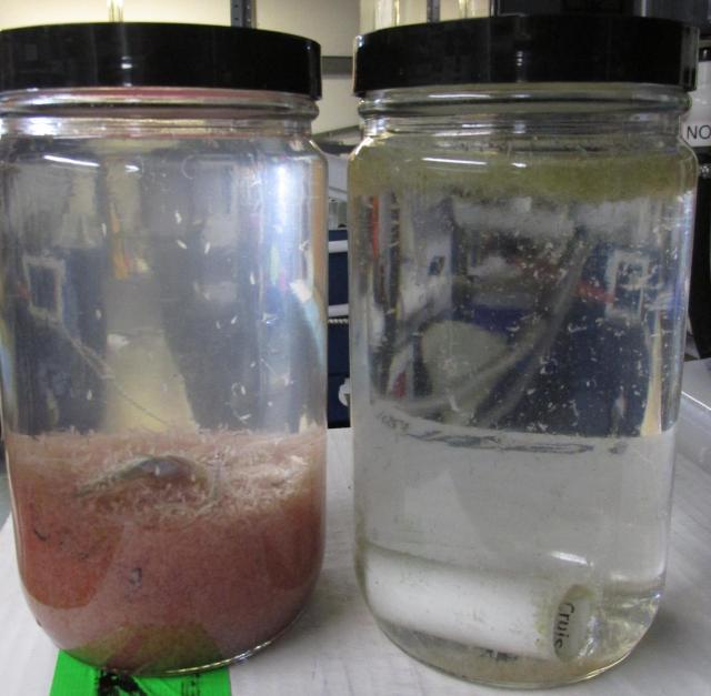 PlanktonComparison rd.jpg