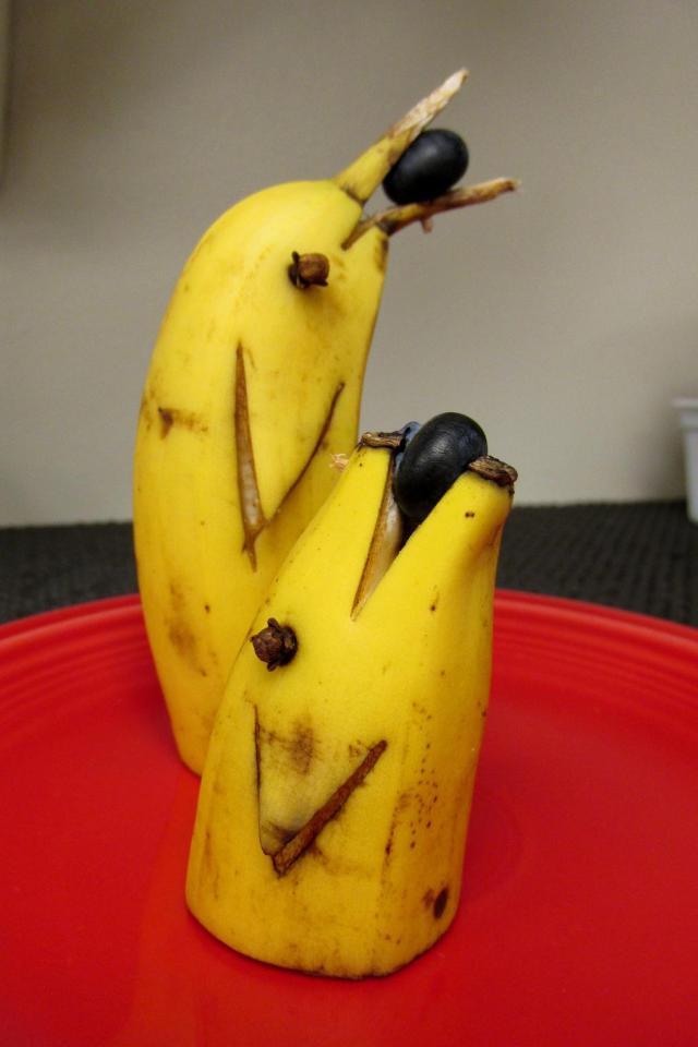 Banana Dolphins Paul Acob rd