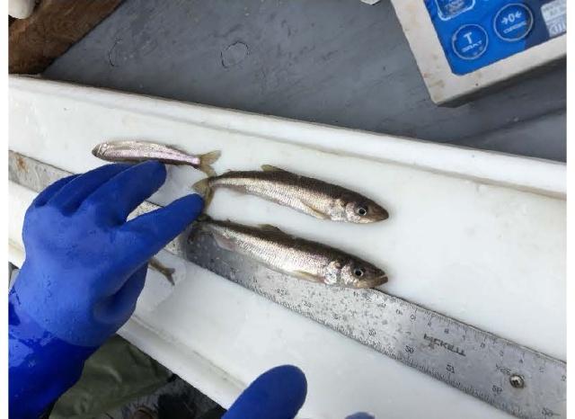 three small fish next to ruleron cutting board
