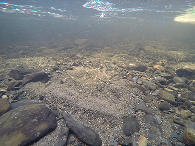 Depression in the stream bed gravel